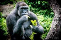 Apes-5164