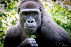 Apes-5647
