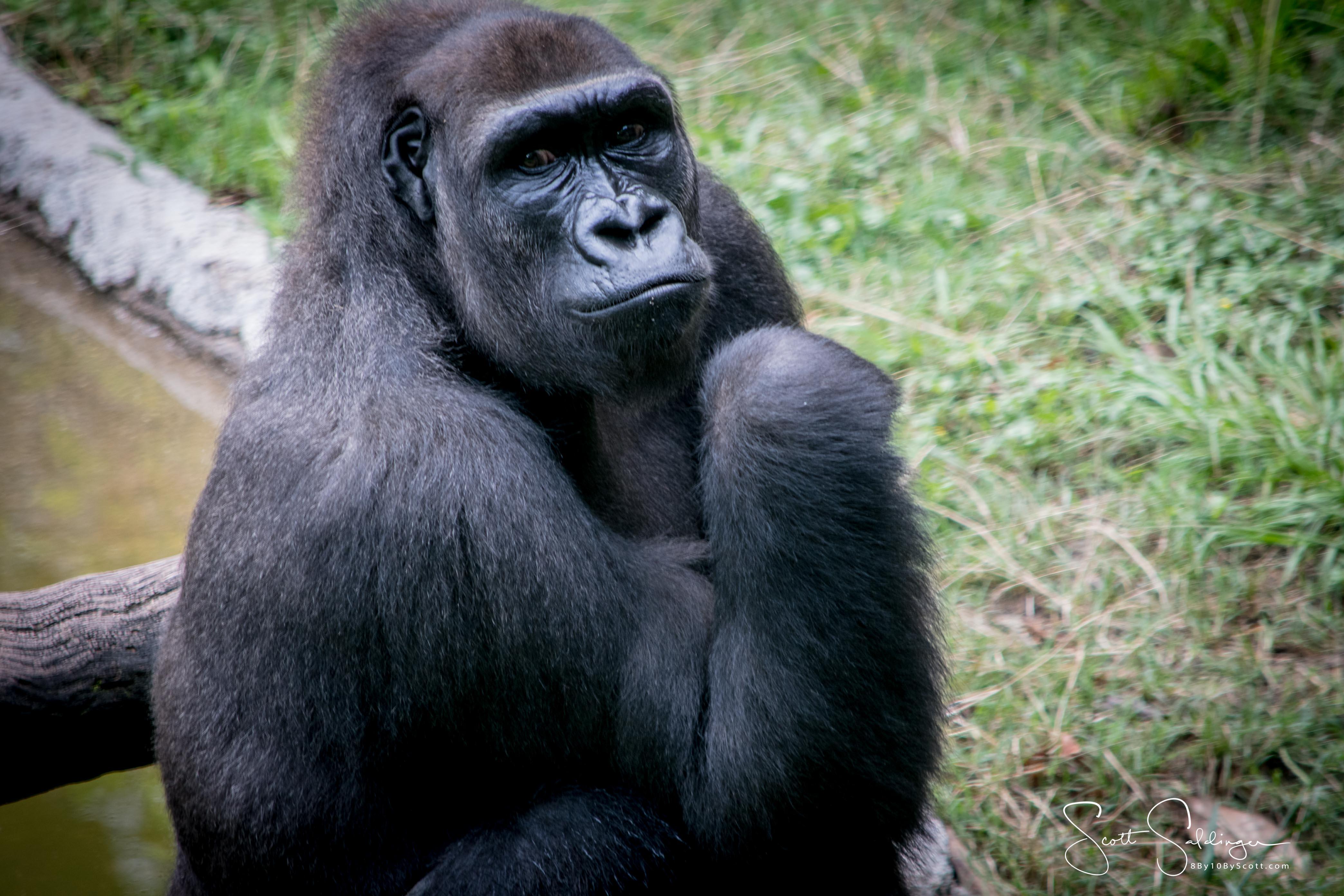 Apes-4892