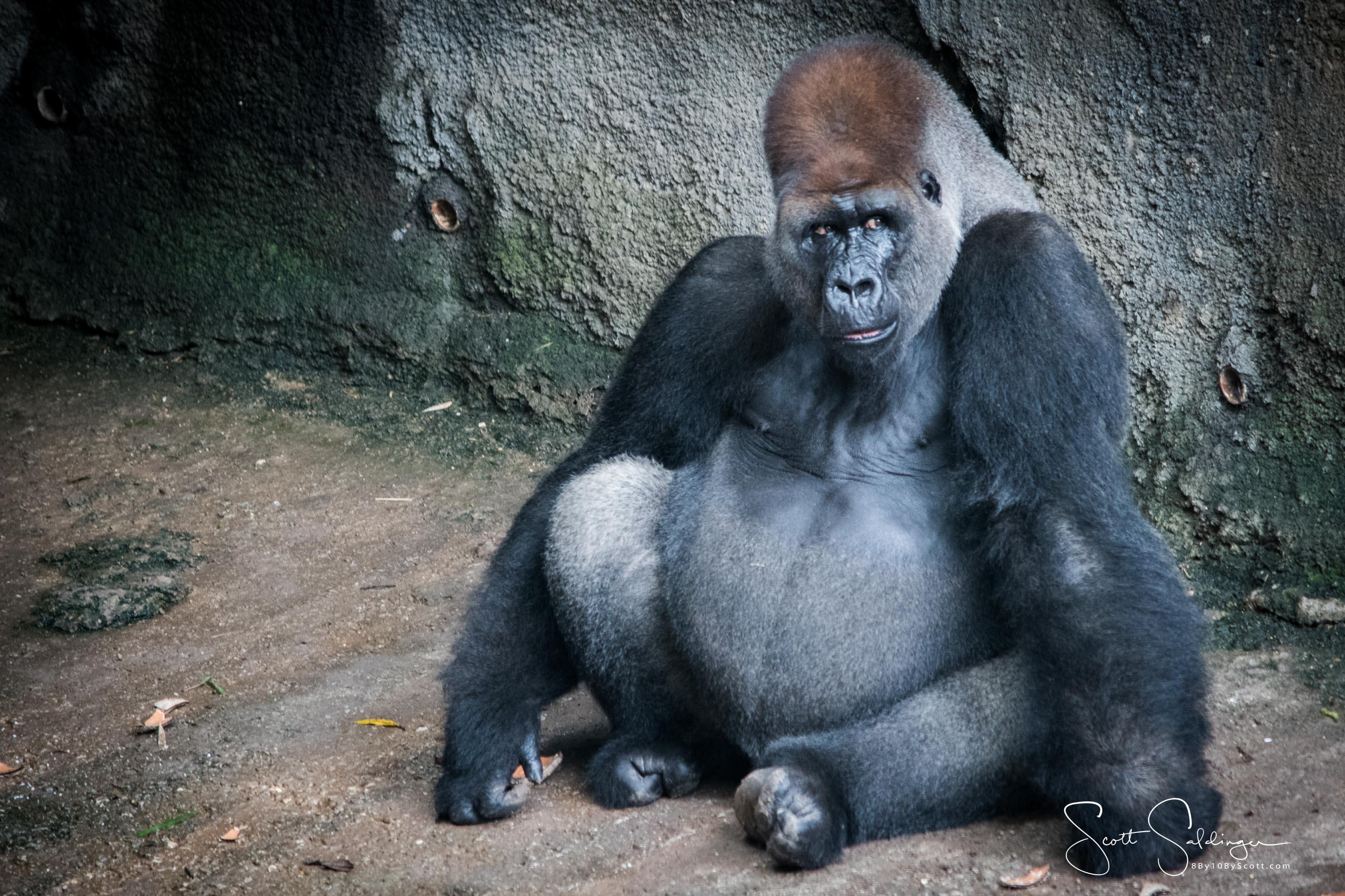 Apes-4965