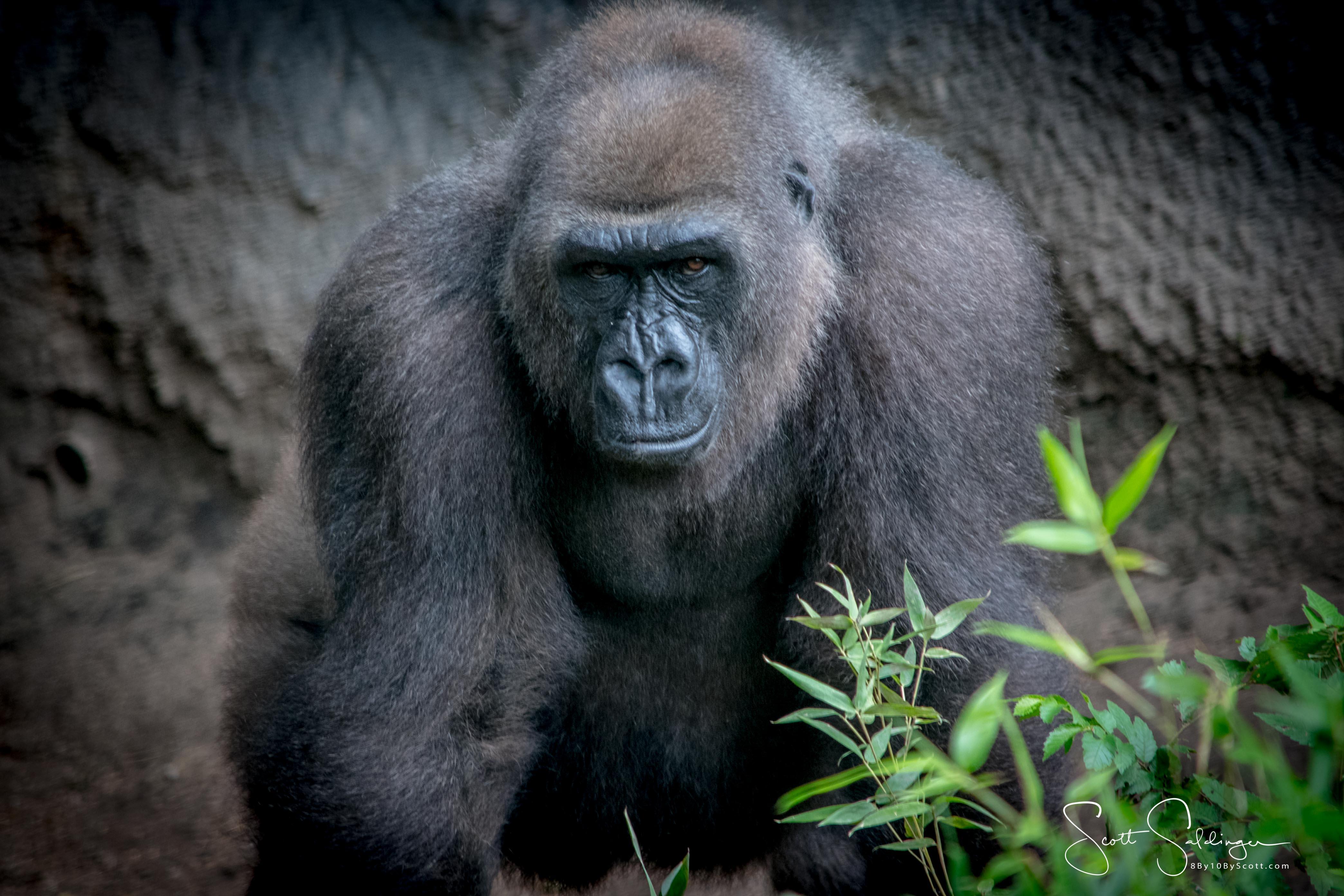 Apes-5023
