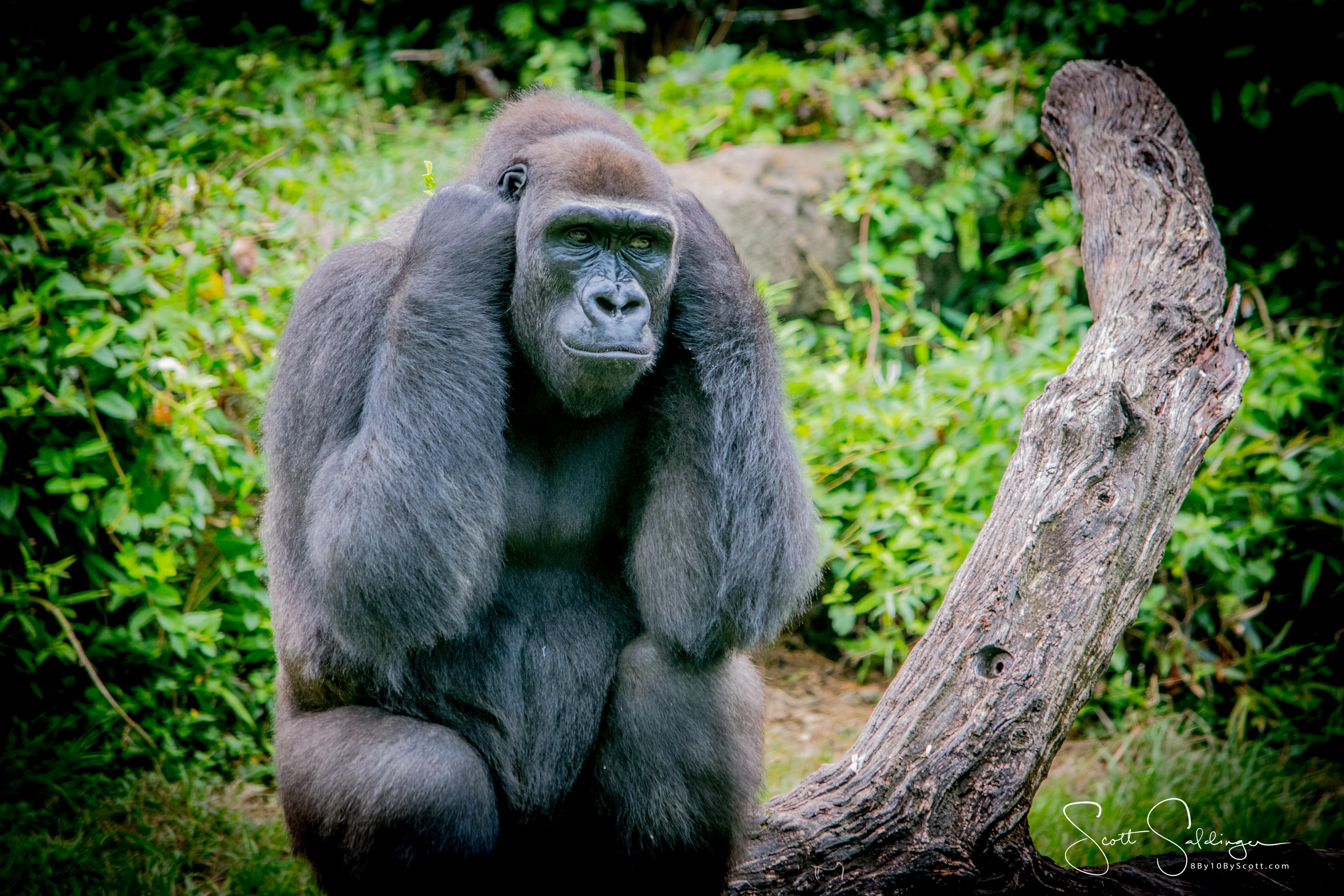 Apes-5270