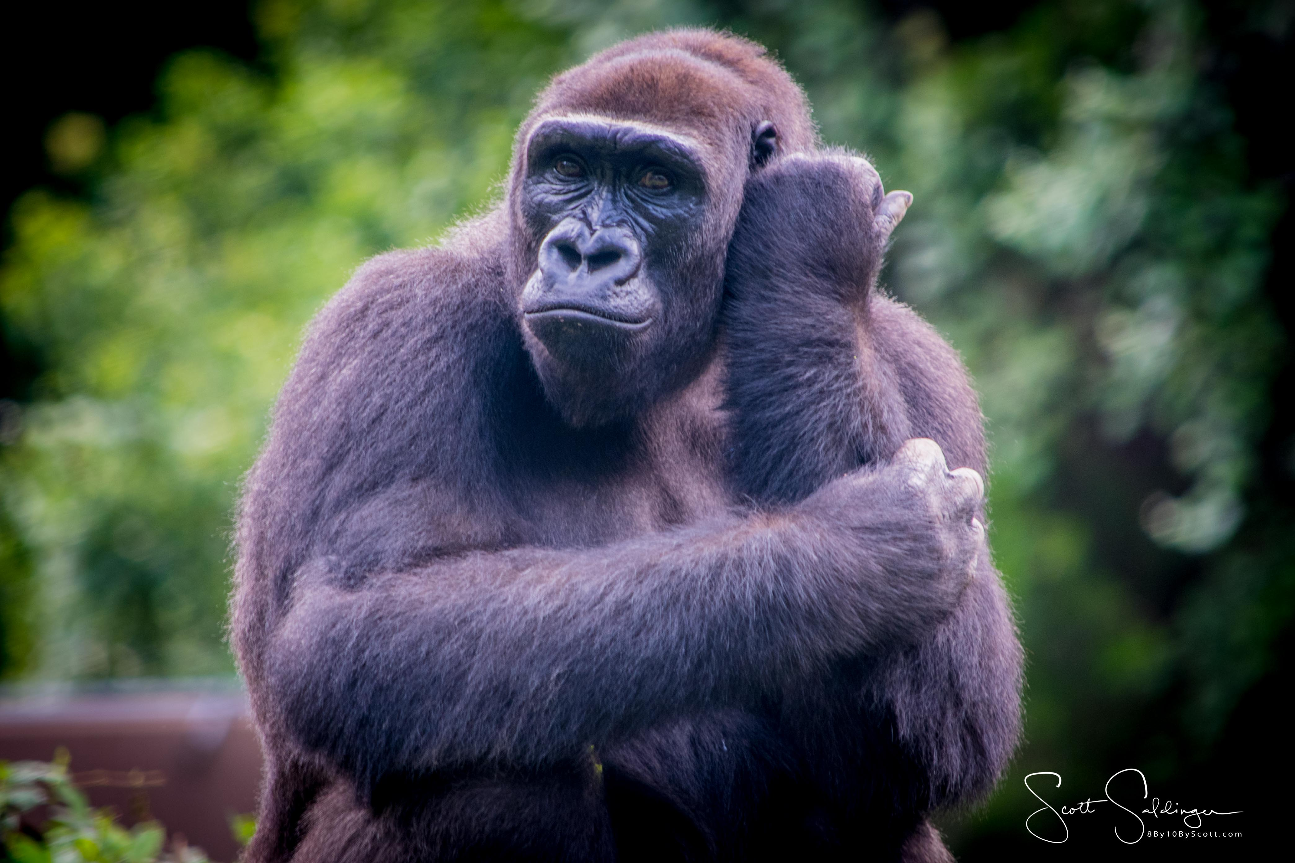 Apes-5418