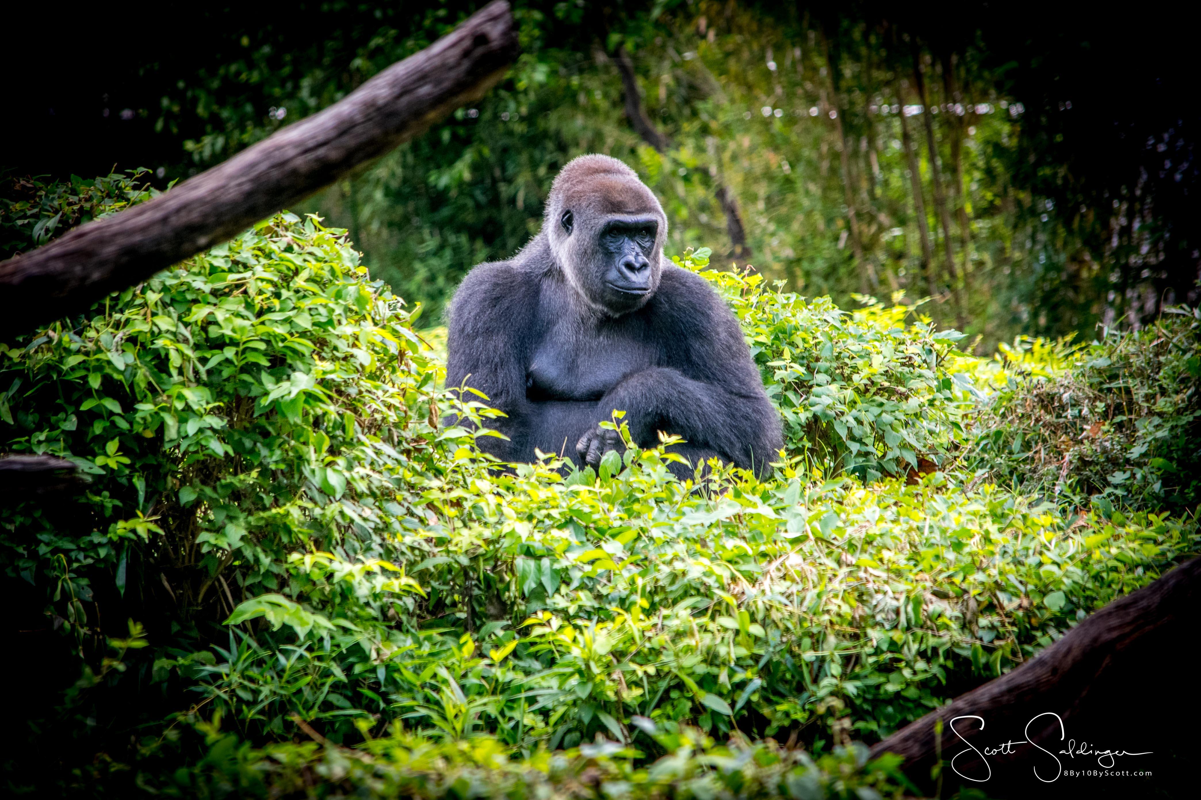 Apes-5473