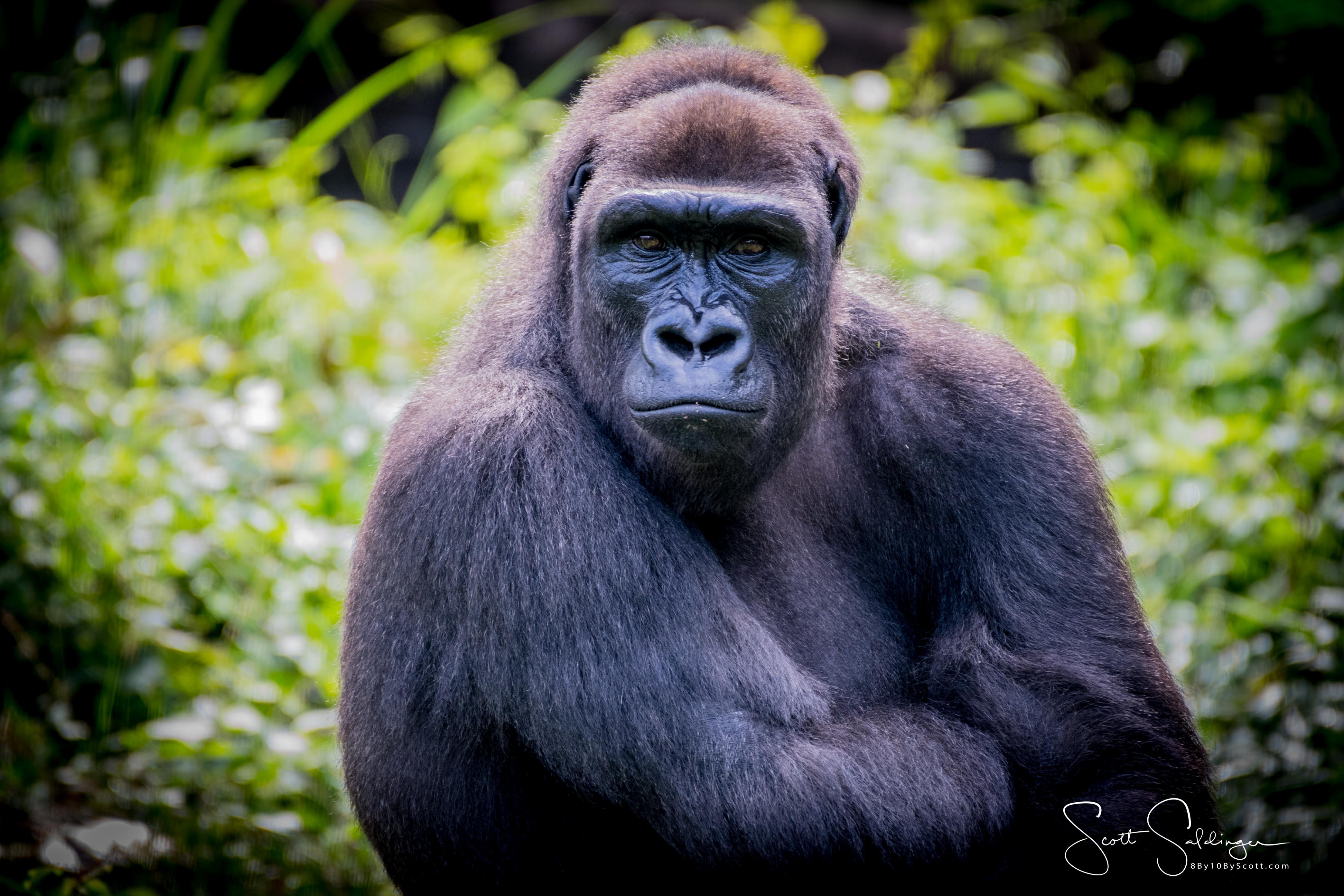 Apes-5514