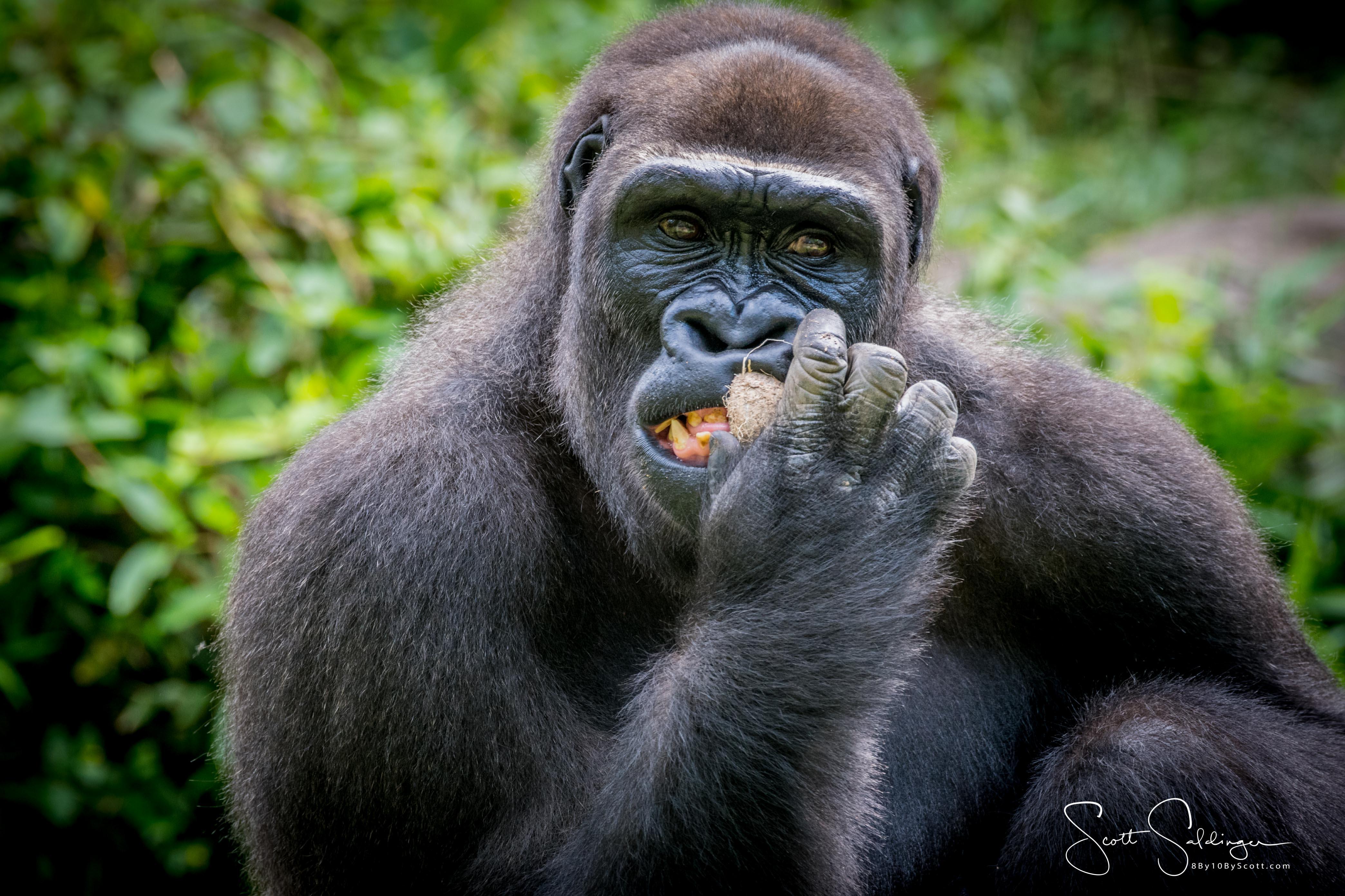 Apes-5543