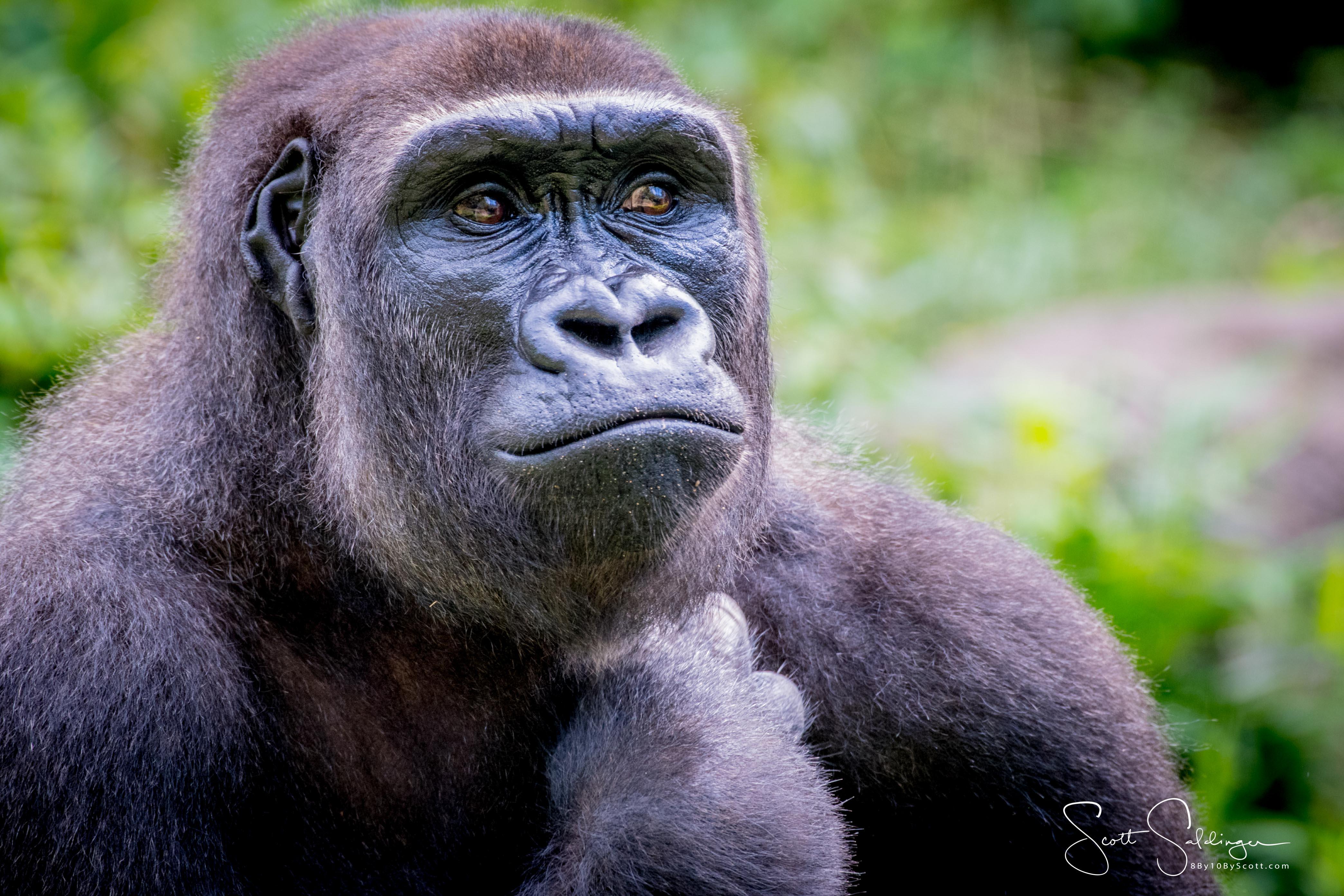 Apes-5560