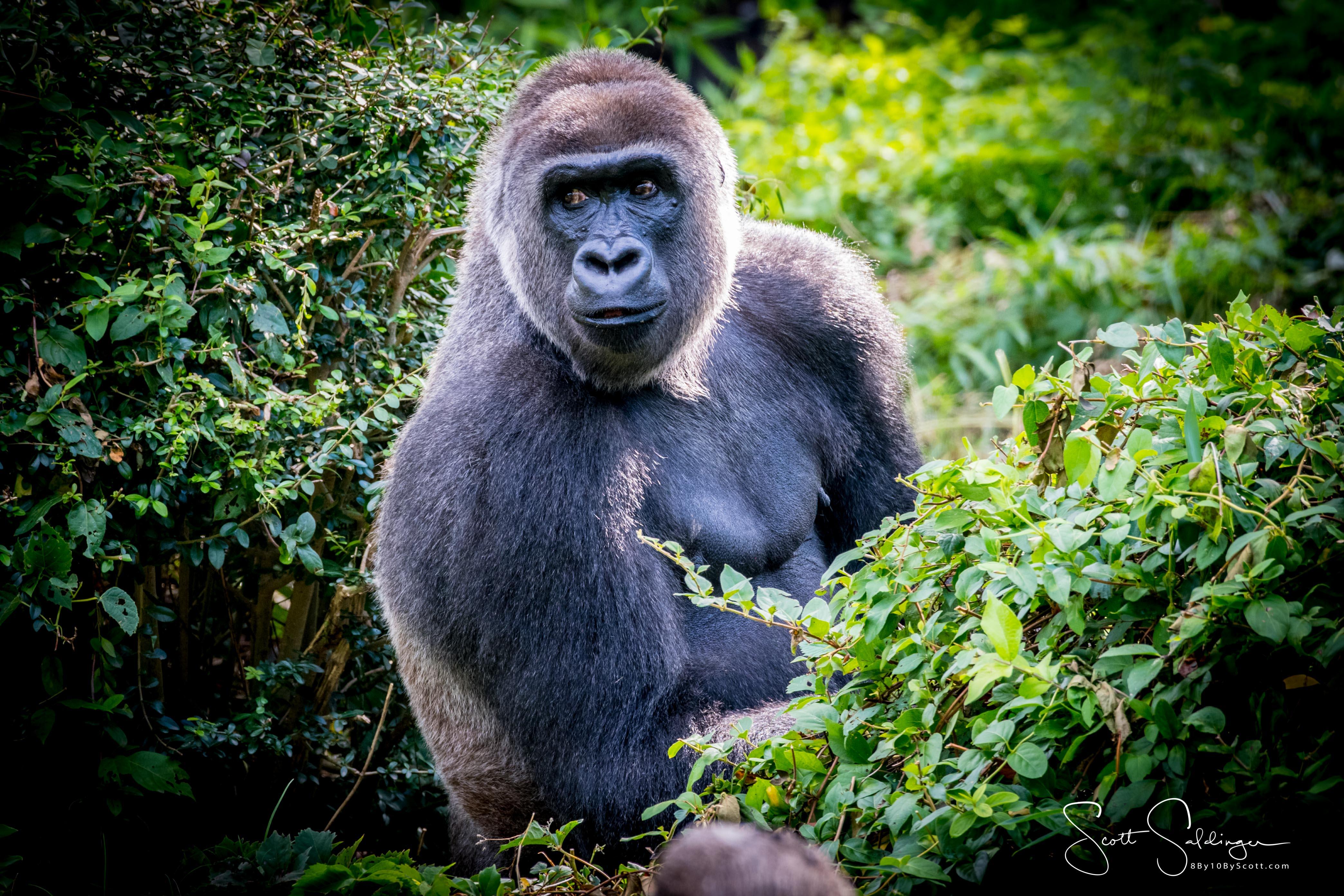 Apes-5600