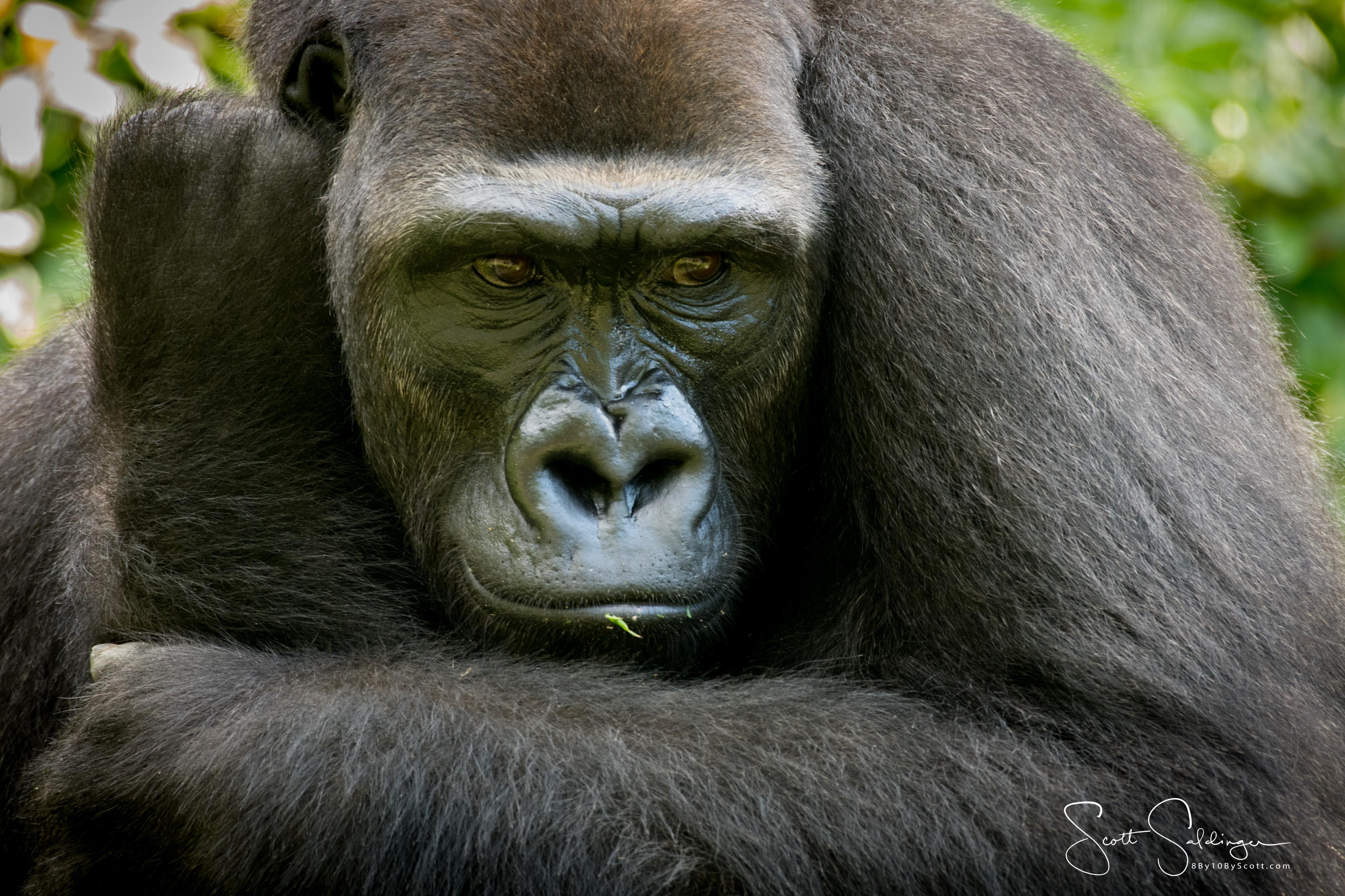 Apes-5653