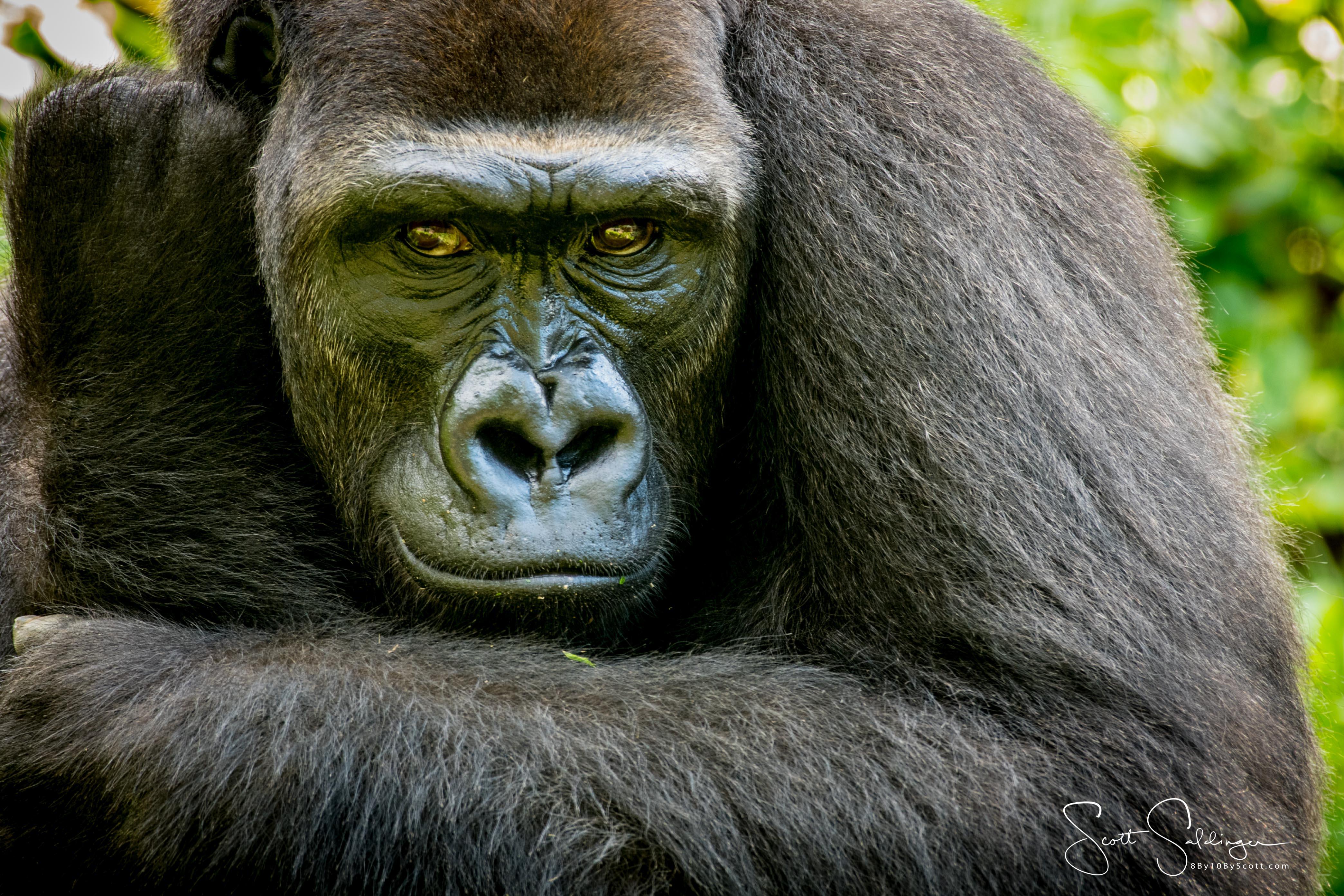 Apes-5658