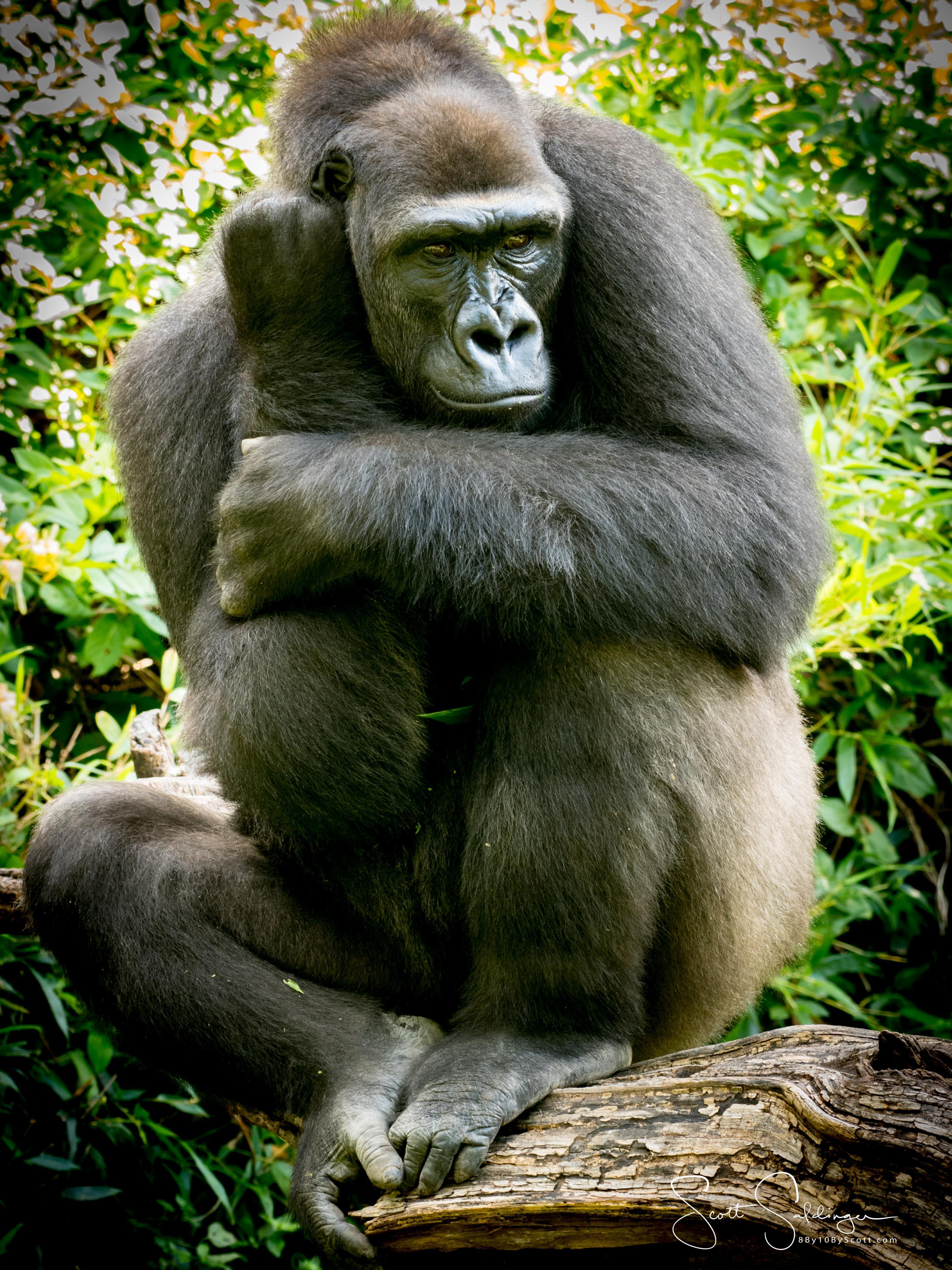 Apes-5694