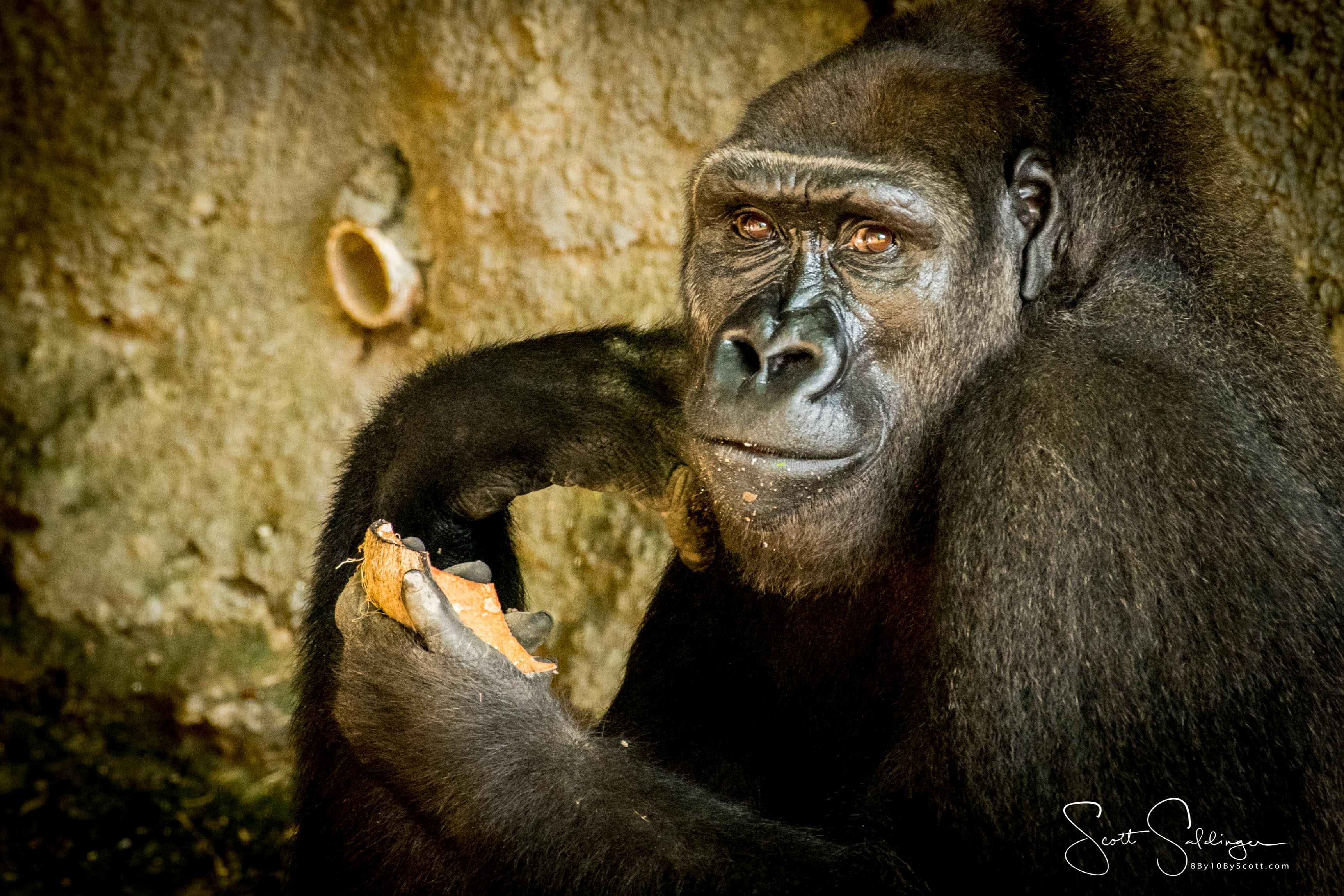 Apes-5724