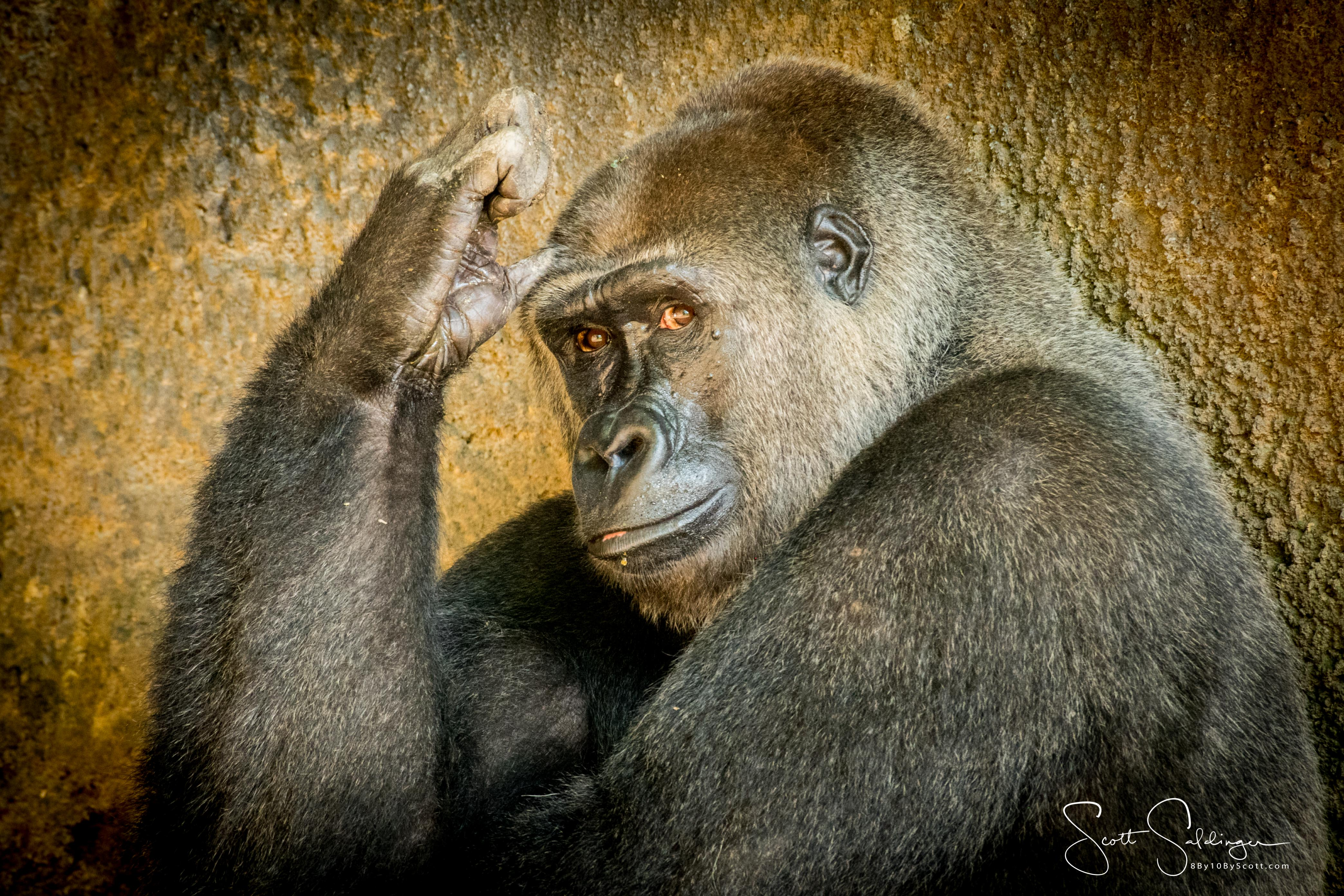 Apes-5734