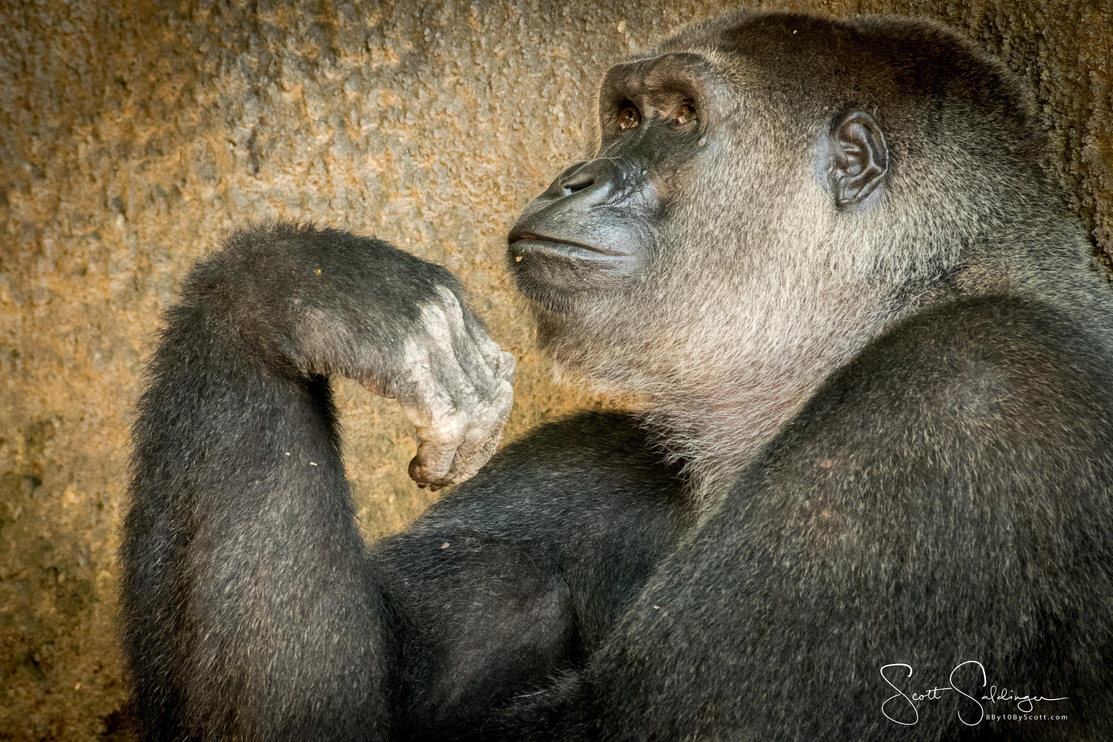 Apes-5763