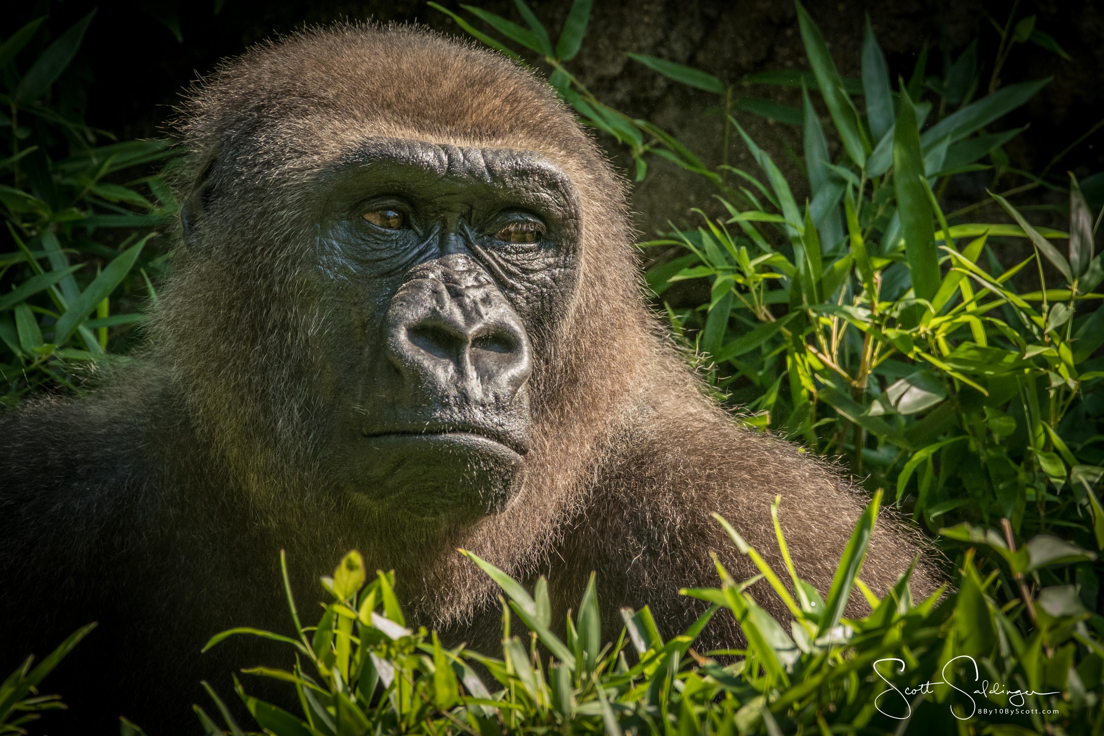 Apes-5793