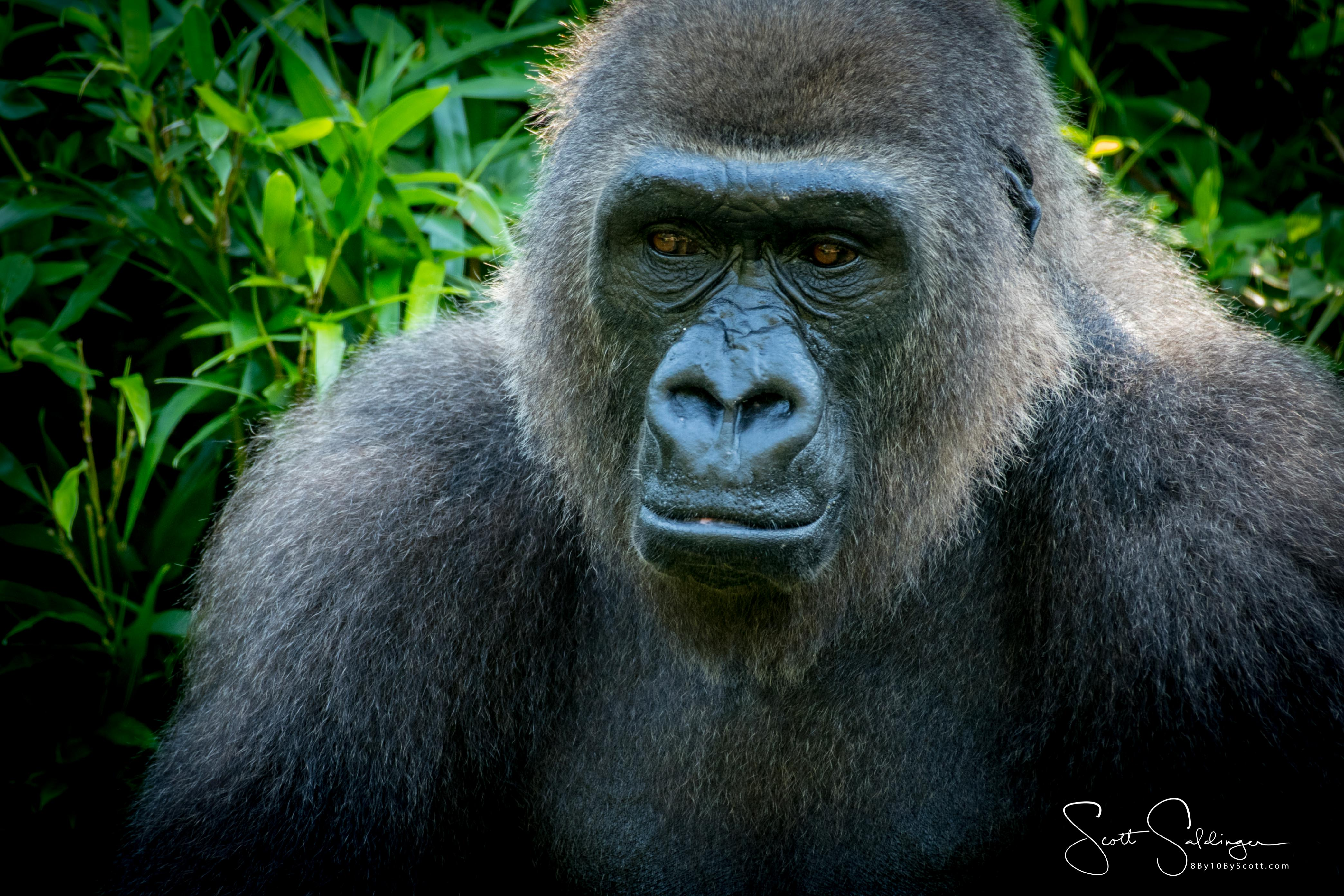 Apes-5855