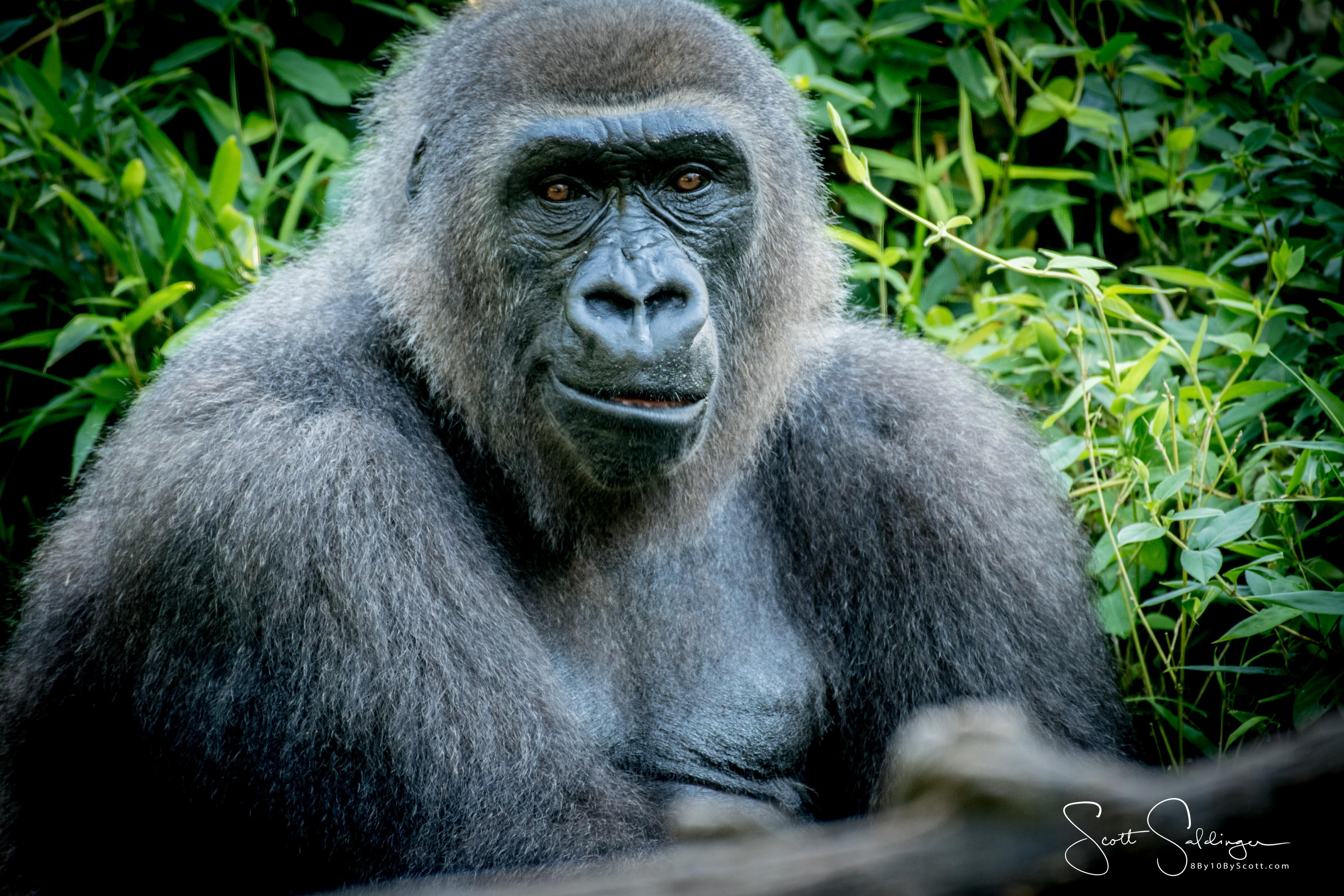 Apes-5957