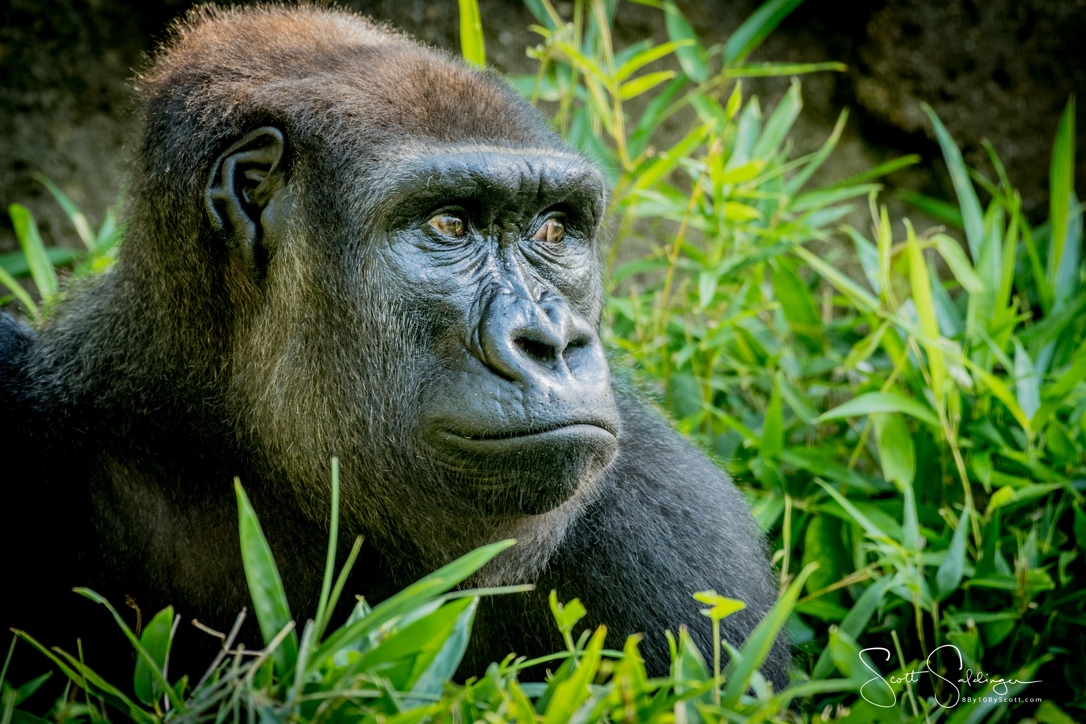 Apes-6039