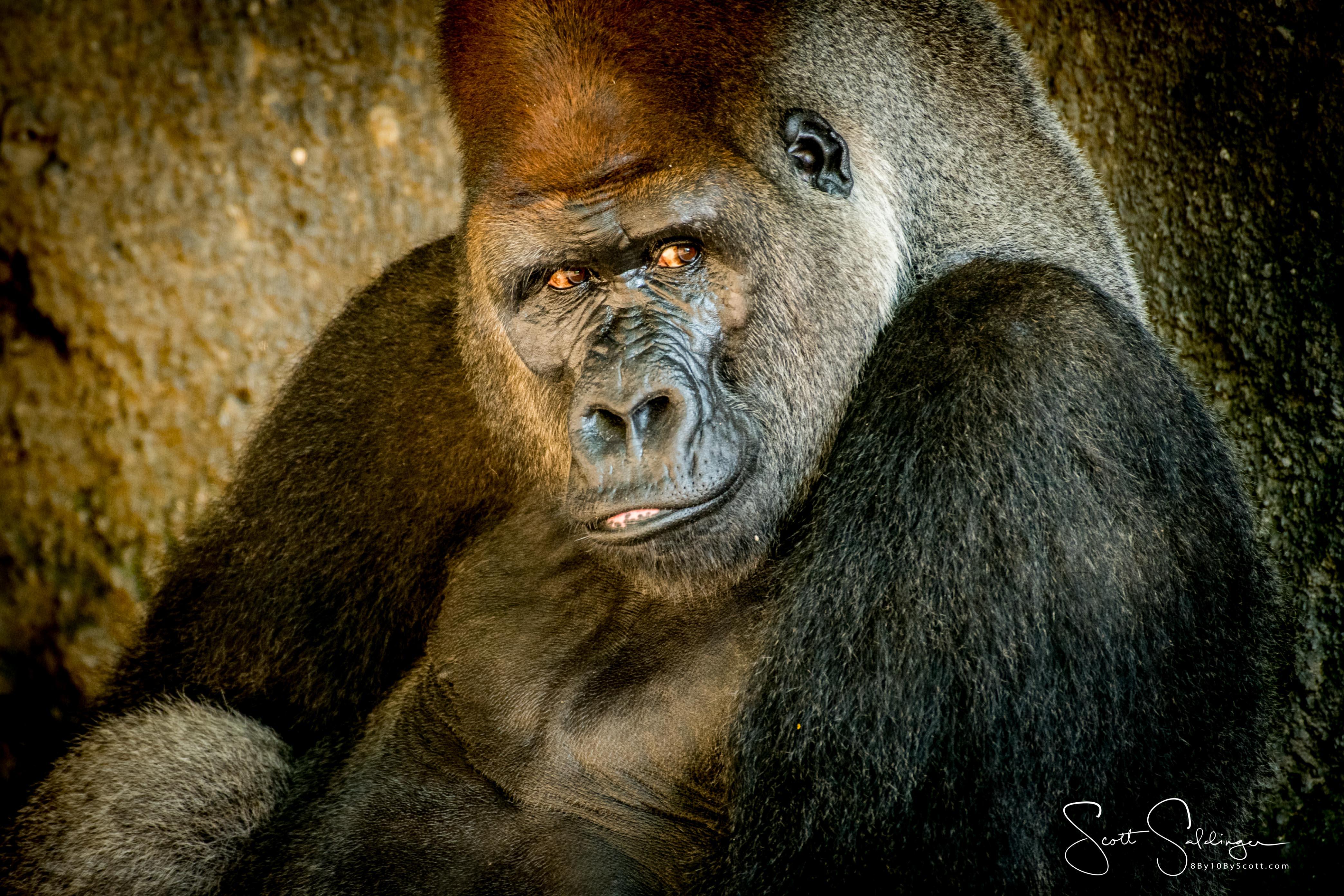 Apes-6055