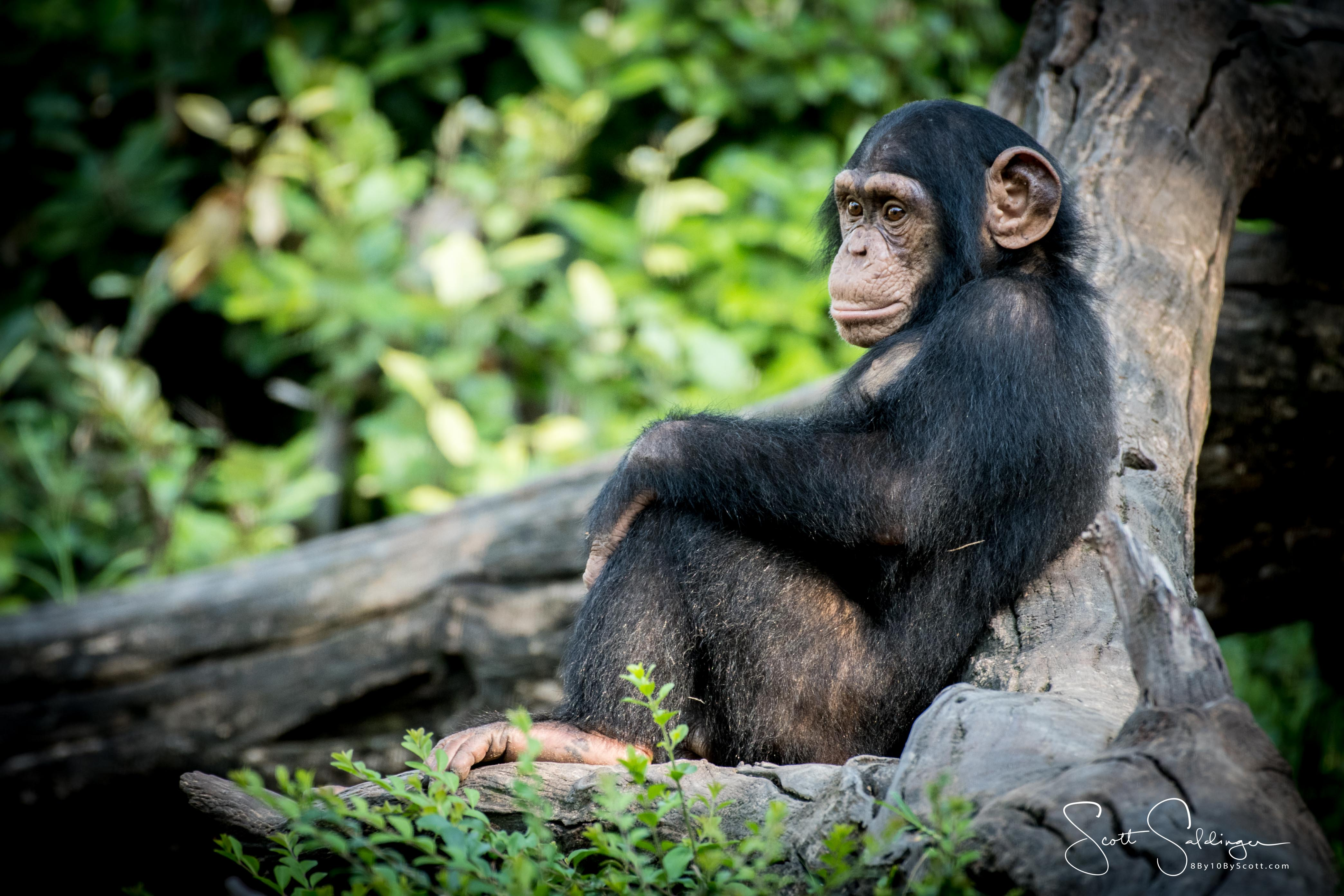 Apes-6090