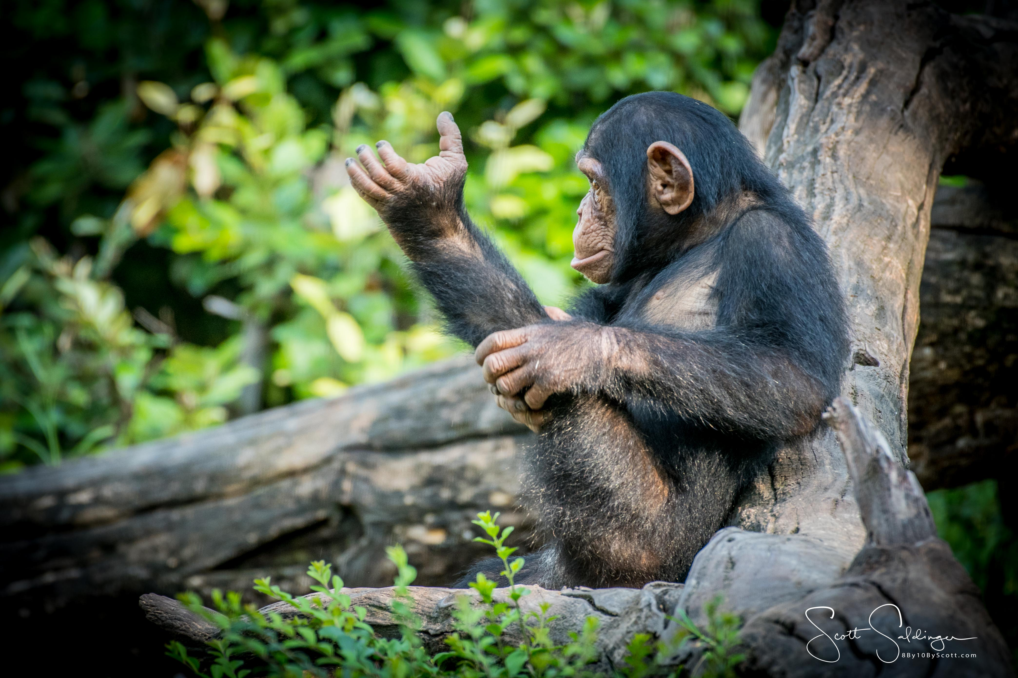 Apes-6100