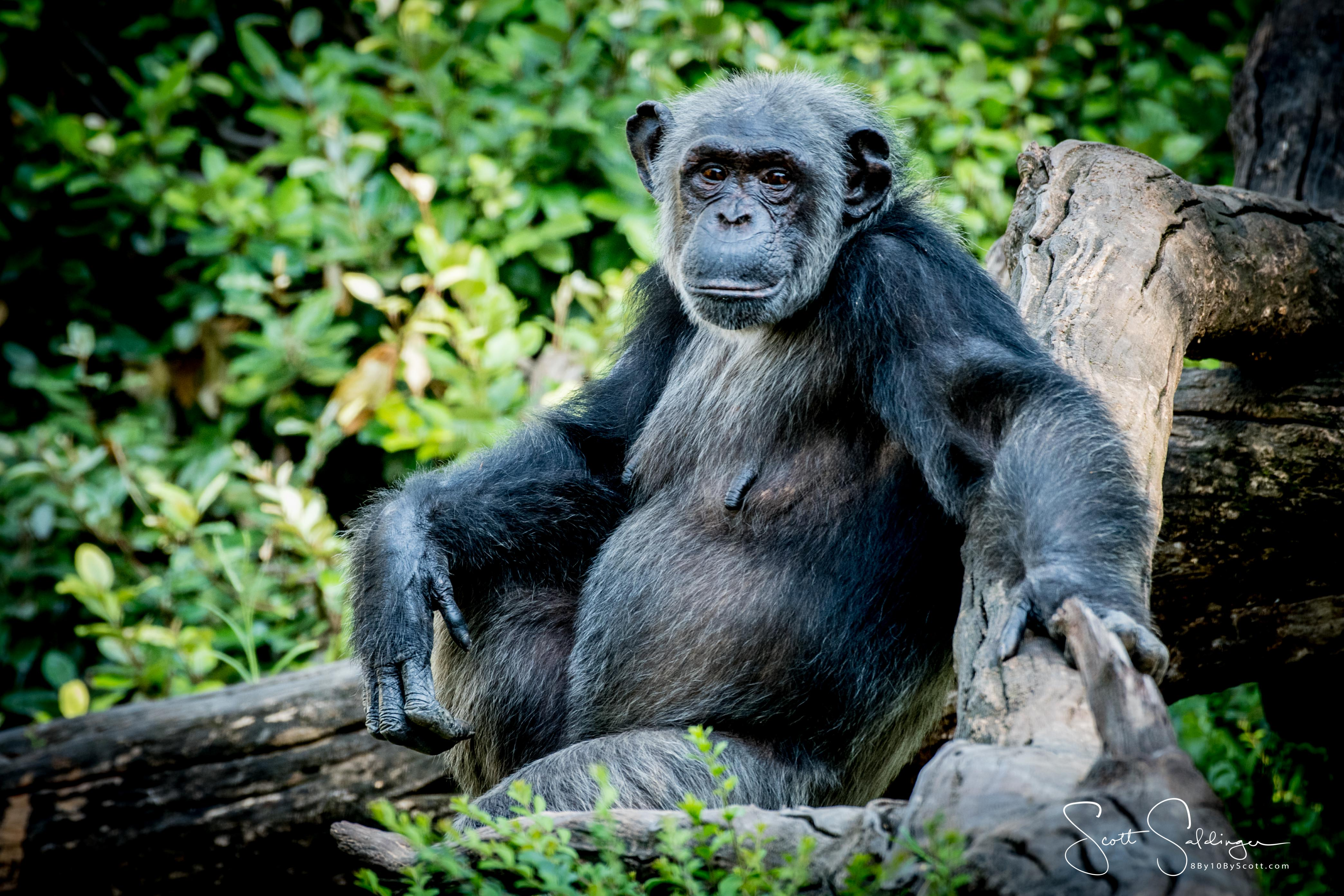 Apes-6124