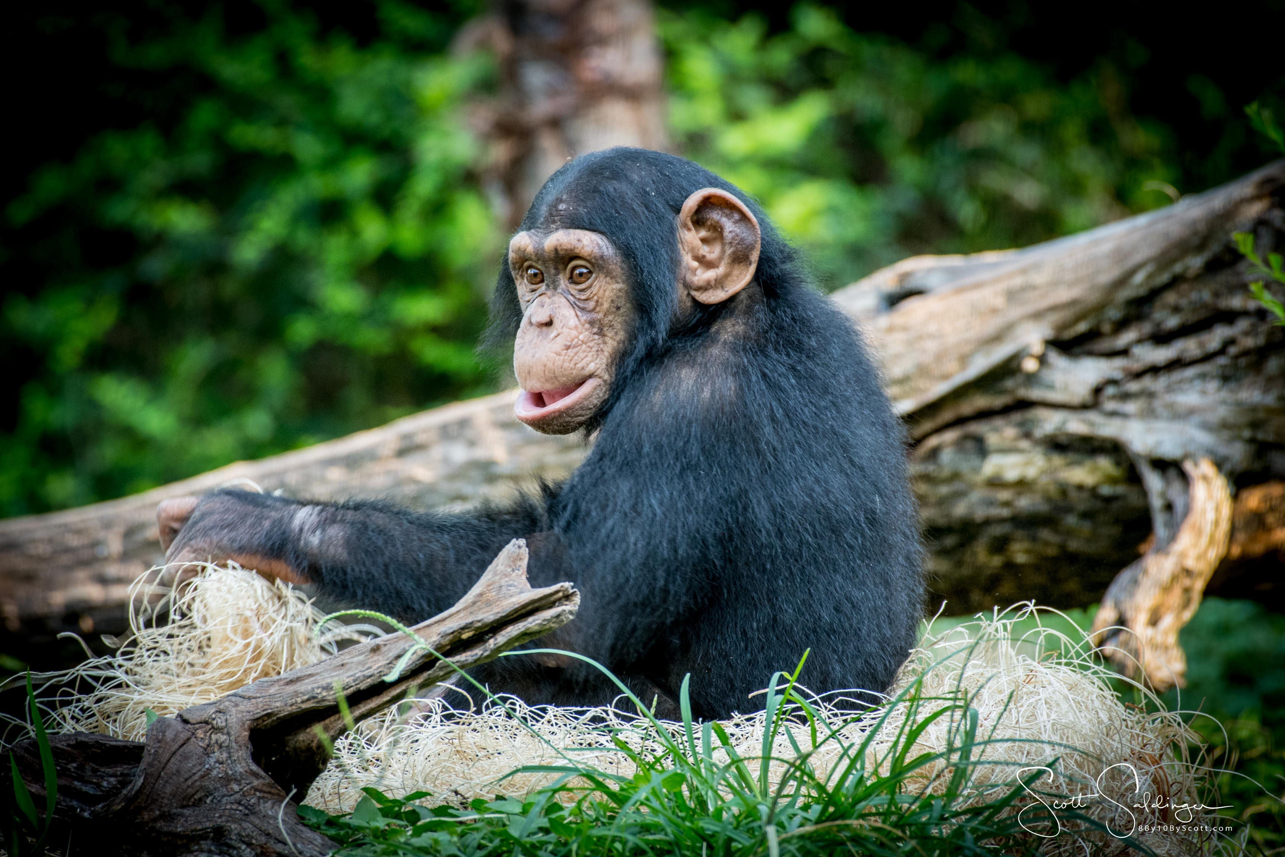 Apes-6194