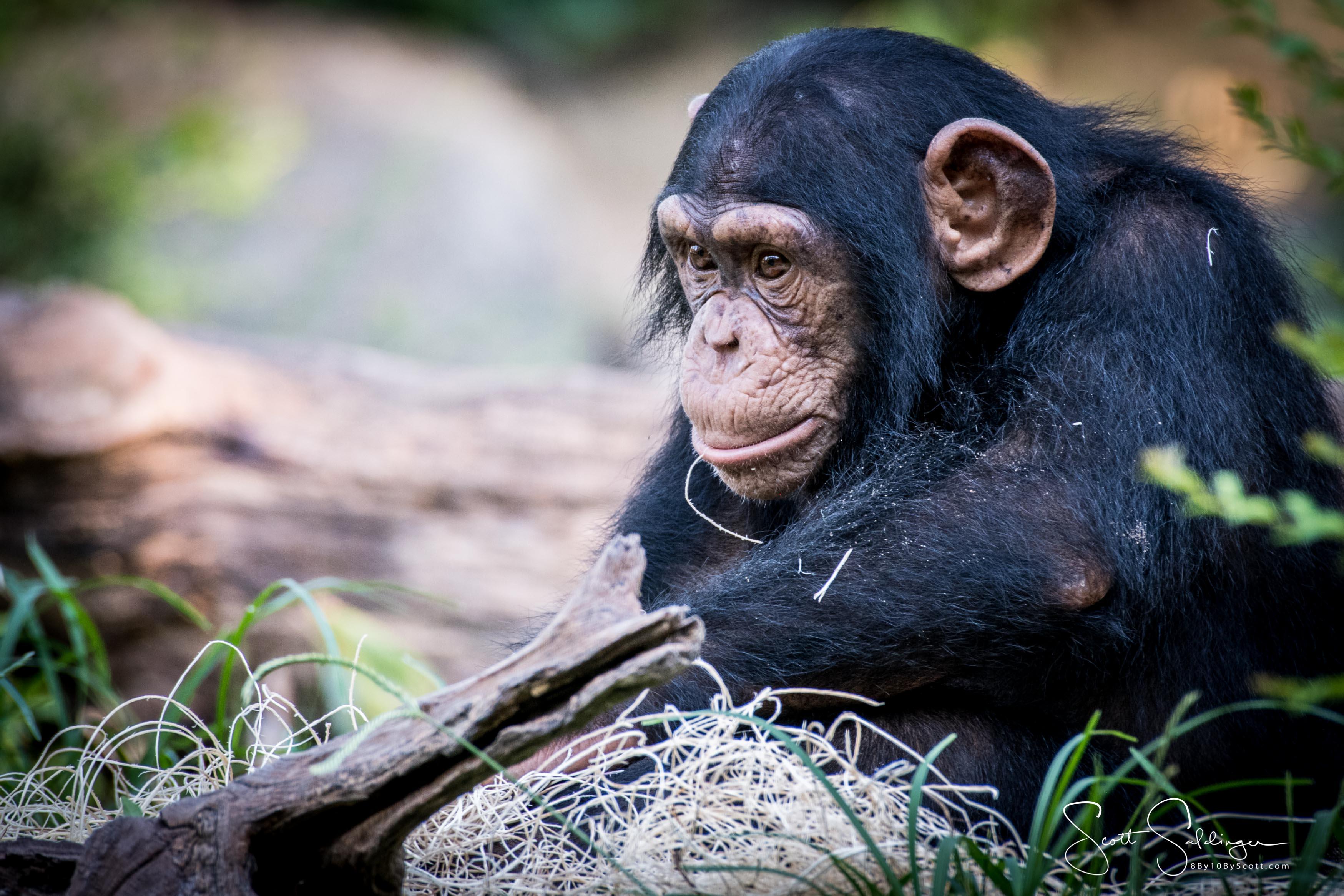Apes-6300