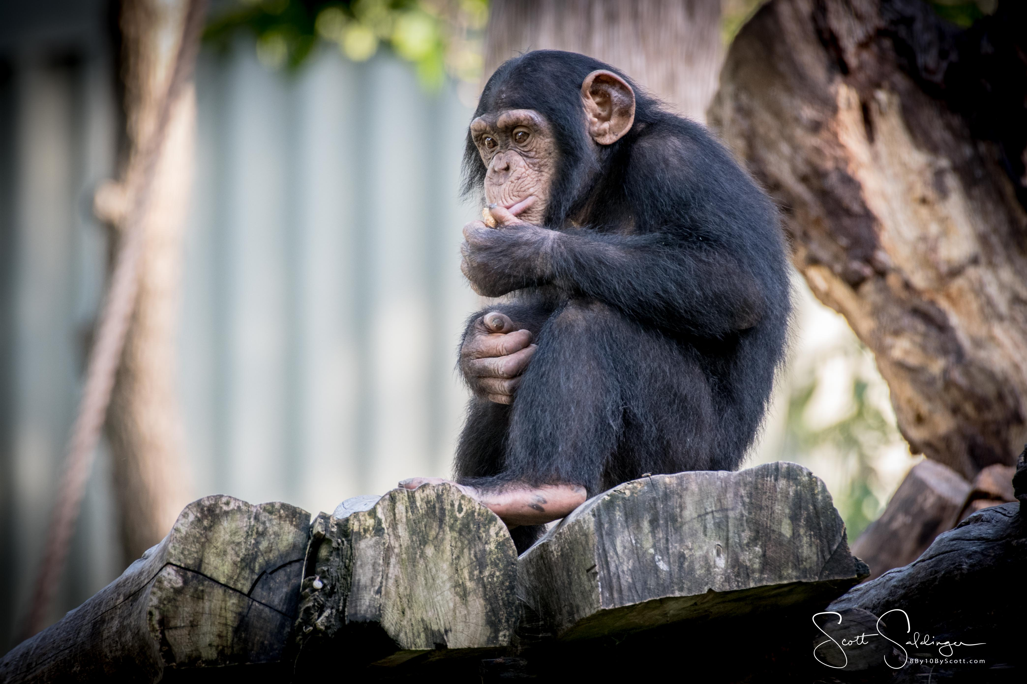Apes-6418