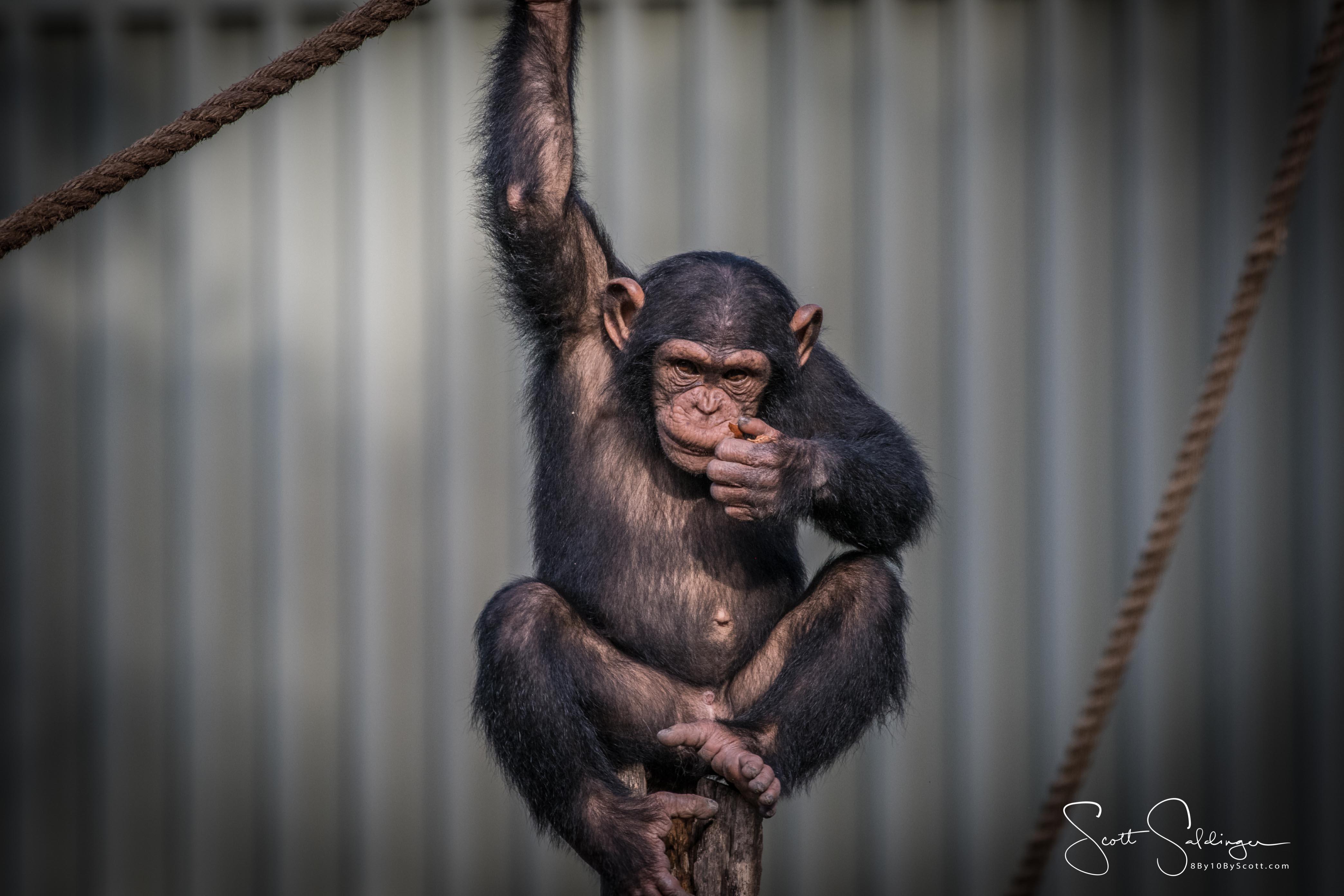 Apes-6562