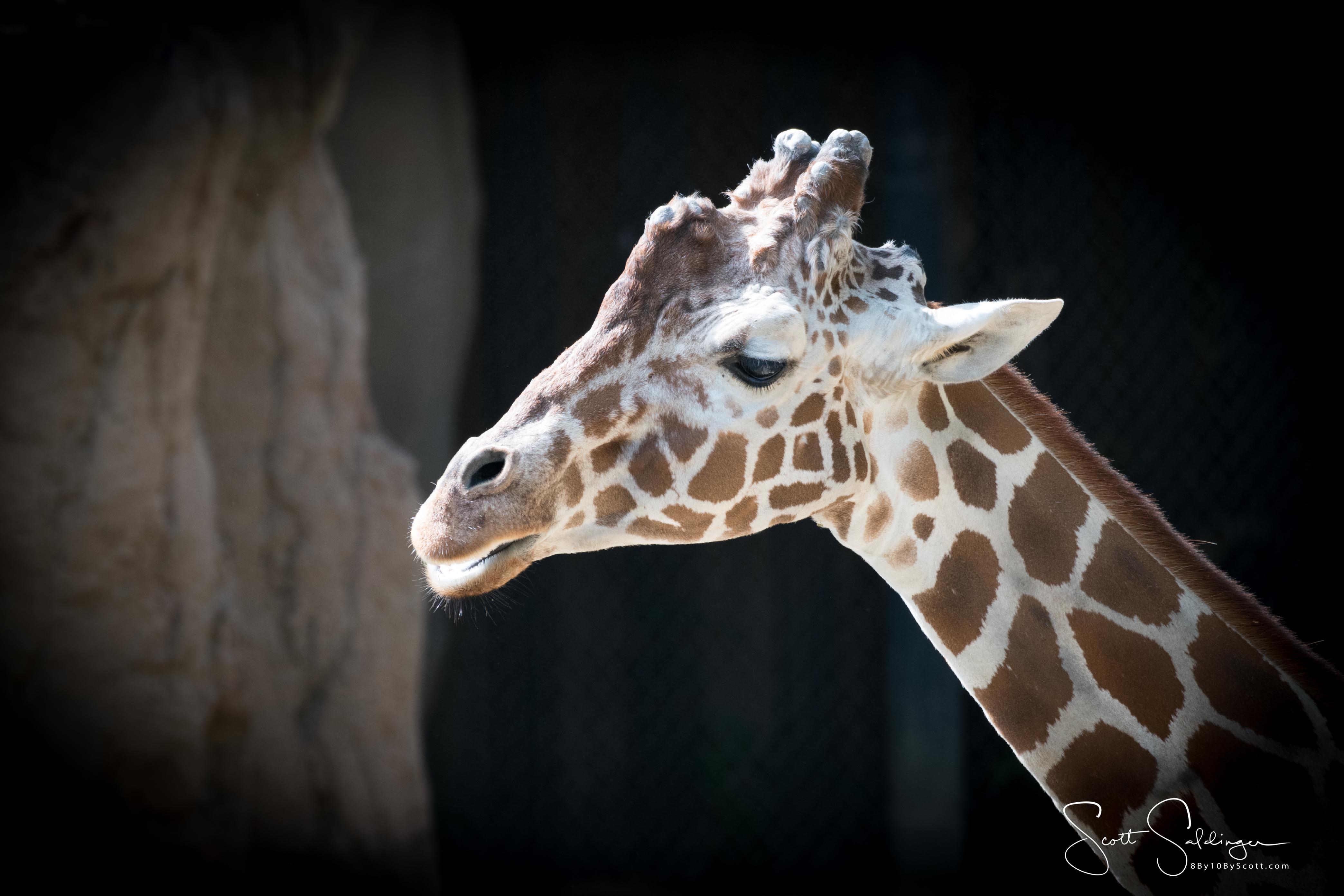 Dallas Zoo Random