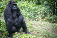 Apes-4918