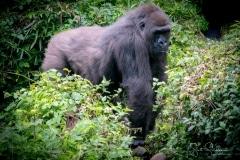 Apes-4932