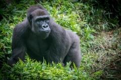 Apes-4953
