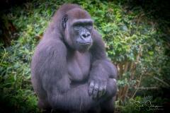 Apes-5038