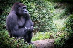Apes-5039