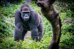 Apes-5045