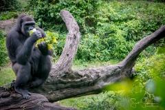 Apes-5104