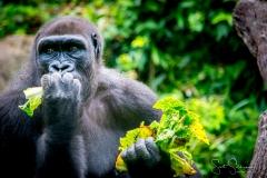 Apes-5107