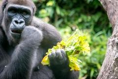 Apes-5129