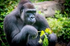 Apes-5196