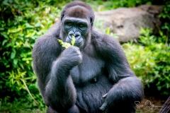 Apes-5213