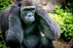 Apes-5228