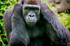 Apes-5236