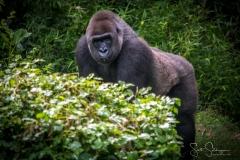 Apes-5254
