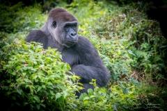 Apes-5306