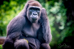 Apes-5458