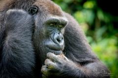 Apes-5531
