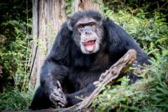 Apes-6605