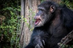 Apes-6629